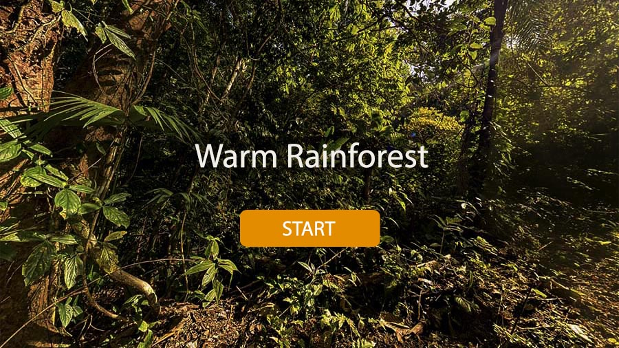 Warm Rainforest